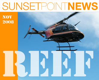 REEF: our new November 2008 Newsletter.